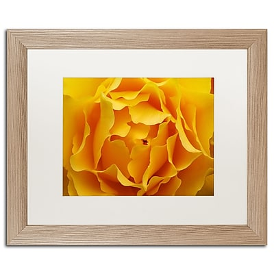 Trademark Fine Art ''Hypnotic Yellow Rose'' by Kurt Shaffer 16