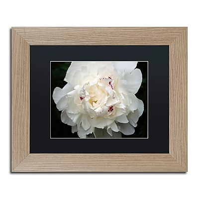 Trademark Fine Art ''Perfect Peony'' by Kurt Shaffer 11