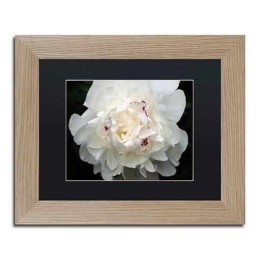 """Trademark Fine Art ''Perfect Peony'' by Kurt Shaffer 11"""" x 14"""" Black Matted Wood Frame (KS1-T1114BMF)"""