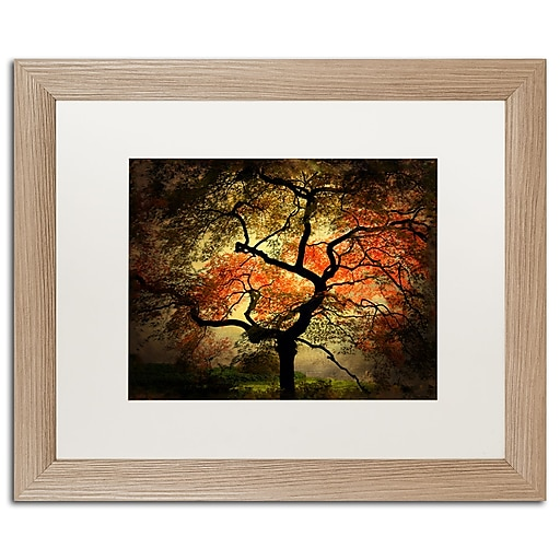 "Trademark Fine Art ''Japanese'' by Philippe Sainte-Laudy 16"" x 20"" White Matted Wood Frame (PSL020-T1620MF)"