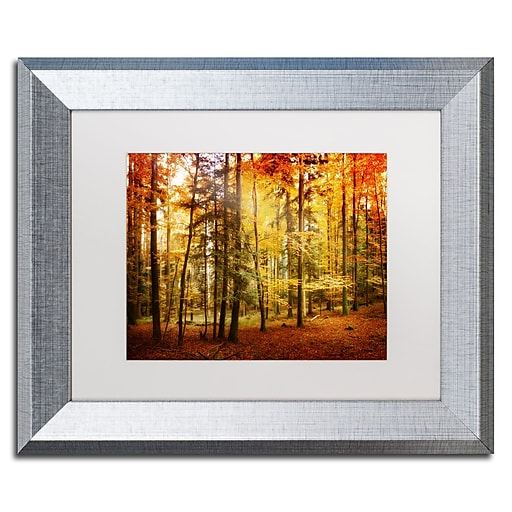 """Trademark Fine Art ''Fall Color'' by Philippe Sainte-Laudy 11"""" x 14"""" White Matted Silver Frame (PSL0225-S1114MF)"""