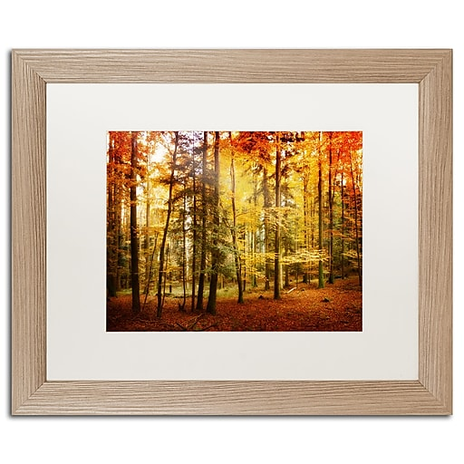 "Trademark Fine Art ''Fall Color'' by Philippe Sainte-Laudy 16"" x 20"" White Matted Wood Frame (PSL0225-T1620MF)"