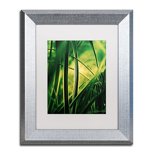 """Trademark Fine Art ''Miniature'' by Philippe Sainte-Laudy 11"""" x 14"""" White Matted Silver Frame (PSL0233-S1114MF)"""