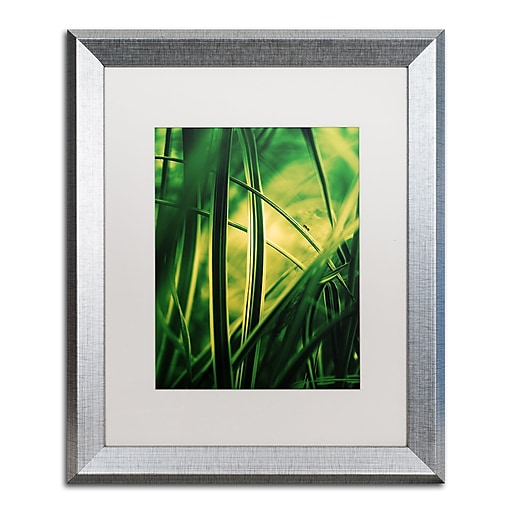 """Trademark Fine Art ''Miniature'' by Philippe Sainte-Laudy 16"""" x 20"""" White Matted Silver Frame (PSL0233-S1620MF)"""