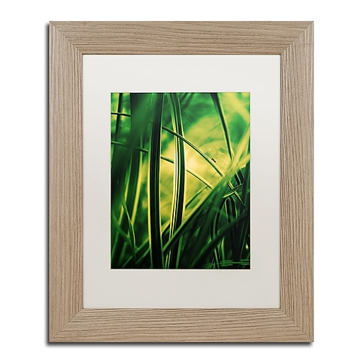 """Trademark Fine Art ''Miniature'' by Philippe Sainte-Laudy 11"""" x 14"""" White Matted Wood Frame (PSL0233-T1114MF)"""