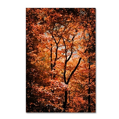 Trademark Fine Art ''Autumn Whispers'' by Philippe Sainte-Laudy 22