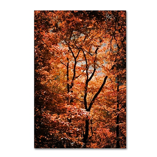 "Trademark Fine Art ''Autumn Whispers'' by Philippe Sainte-Laudy 12"" x 19"" Canvas Art (PSL0421-C1219GG)"