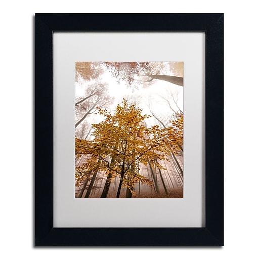 "Trademark Fine Art ''Foggy Days'' by Philippe Sainte-Laudy 11"" x 14"" White Matted Black Frame (PSL0428-B1114MF)"