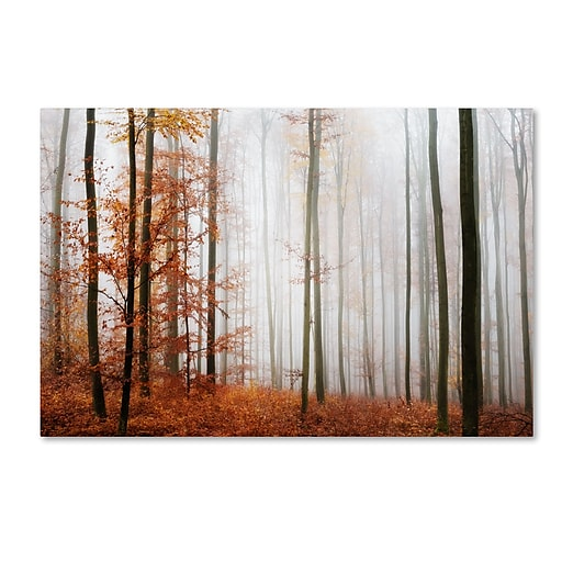 "Trademark Fine Art ''Forest Corner'' by Philippe Sainte-Laudy 16"" x 24"" Canvas Art (PSL0429-C1624GG)"