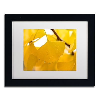 Trademark Fine Art ''Ginkgo Drops'' by Philippe Sainte-Laudy 11