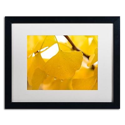 Trademark Fine Art ''Ginkgo Drops'' by Philippe Sainte-Laudy 16