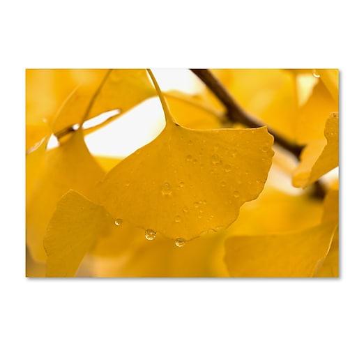 "Trademark Fine Art ''Ginkgo Drops'' by Philippe Sainte-Laudy 16"" x 24"" Canvas Art (PSL0430-C1624GG)"