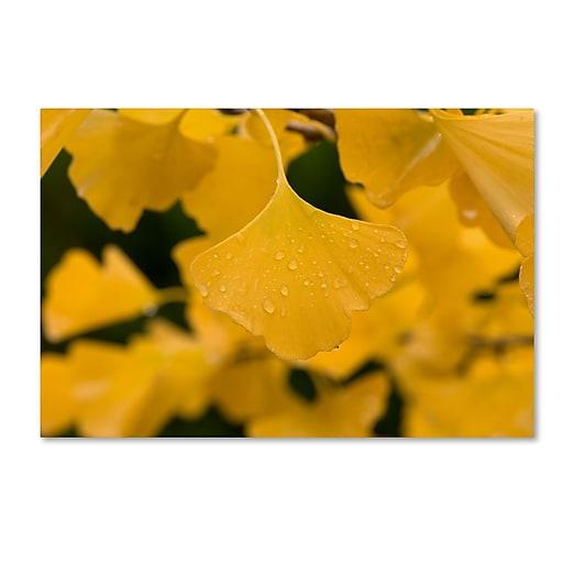 "Trademark Fine Art ''Ginkgo in the Rain'' by Philippe Sainte-Laudy 22"" x 32"" Canvas Art (PSL0431-C2232GG)"