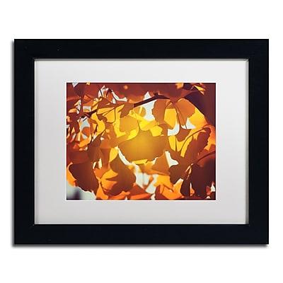 Trademark Fine Art ''Ginkgo Leaves'' by Philippe Sainte-Laudy 11
