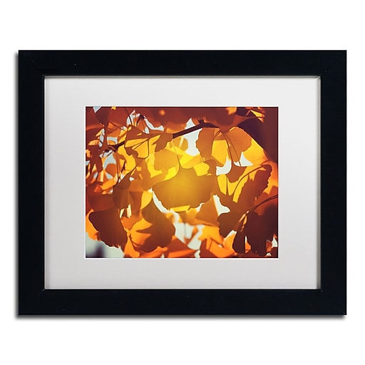 "Trademark Fine Art ''Ginkgo Leaves'' by Philippe Sainte-Laudy 11"" x 14"" White Matted Black Frame (PSL0433-B1114MF)"
