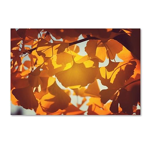 "Trademark Fine Art ''Ginkgo Leaves'' by Philippe Sainte-Laudy 30"" x 47"" Canvas Art (PSL0433-C3047GG)"