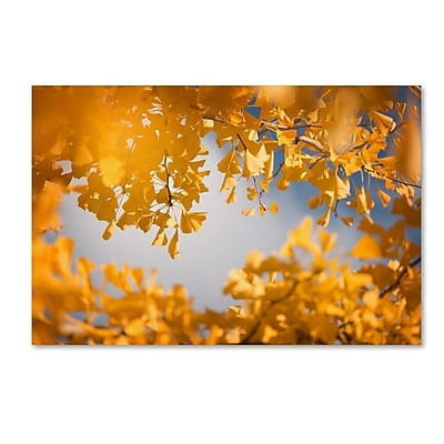 Trademark Fine Art ''Ginkgophytes'' by Philippe Sainte-Laudy 16