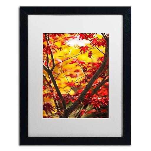 "Trademark Fine Art ''Morning Jive'' by Philippe Sainte-Laudy 16"" x 20"" White Matted Black Frame (PSL0439-B1620MF)"