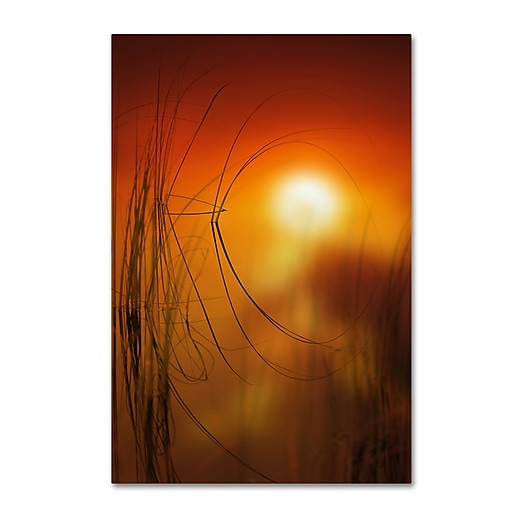 "Trademark Fine Art ''Nature Time Machine'' by Philippe Sainte-Laudy 22"" x 32"" Canvas Art (PSL0440-C2232GG)"