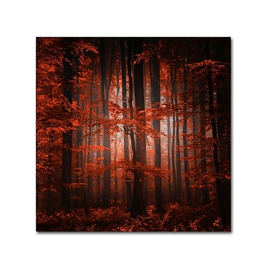 Trademark Fine Art ''Red Parallel Universe'' by Philippe Sainte-Laudy 24