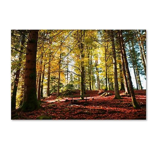 "Trademark Fine Art ''The Autumn Bench'' by Philippe Sainte-Laudy 12"" x 19"" Canvas Art (PSL0451-C1219GG)"