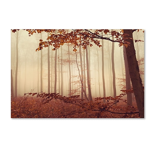 "Trademark Fine Art ''The Last of Fall'' by Philippe Sainte-Laudy 22"" x 32"" Canvas Art (PSL0453-C2232GG)"