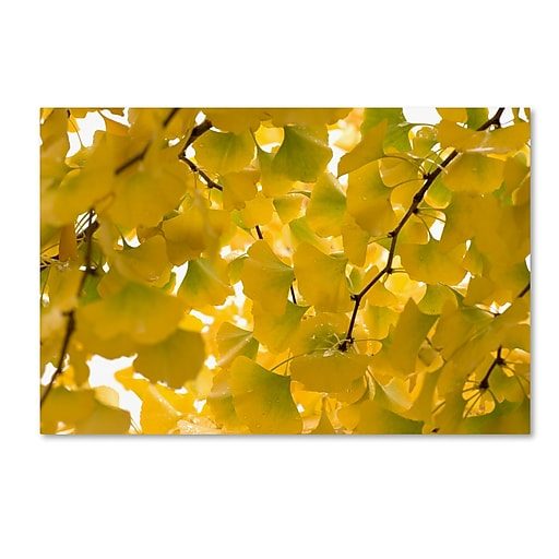 "Trademark Fine Art ''Yellow Autumn'' by Philippe Sainte-Laudy 16"" x 24"" Canvas Art (PSL0460-C1624GG)"
