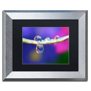"""Trademark Fine Art ''Double Drops'' by Steve Wall 11"""" x 14"""" Black Matted Silver Frame (SW0007-S1114BMF)"""