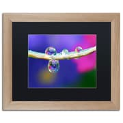 "Trademark Fine Art ''Double Drops'' by Steve Wall 16"" x 20"" Black Matted Wood Frame (SW0007-T1620BMF)"