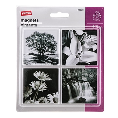 Staples® Photo Magnets, Assorted Designs, 4/Pack