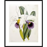 Global Gallery Lily by William Curtis Framed Painting Print; 36 inch H x 29.1 inch W x 1.5 inch D by
