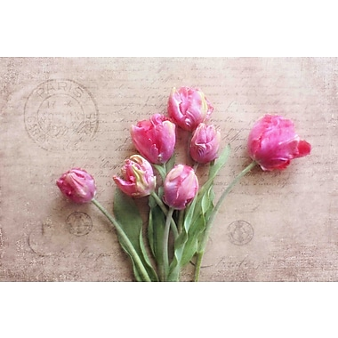 Marmont Hill 'Pink Tulips' by Sylvia Cook Painting Print on Wrapped Canvas; 20 H x 30 W x 1.5 D