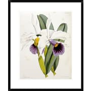 Global Gallery Lily by William Curtis Framed Painting Print; 28 inch H x 22.9 inch W x 1.5 inch D by
