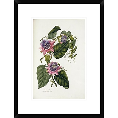 Global Gallery Passion Flowers by Mary Lawrence Framed Painting Print; 22'' H x 16.4'' W x 1.5'' D