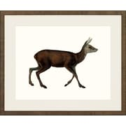 Art Virtuoso American Mammals Framed Painting