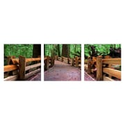 Artistic Bliss Cathedral Grove 3 Piece Framed Photographic Print Set; 24'' H x 24'' W x 1'' D