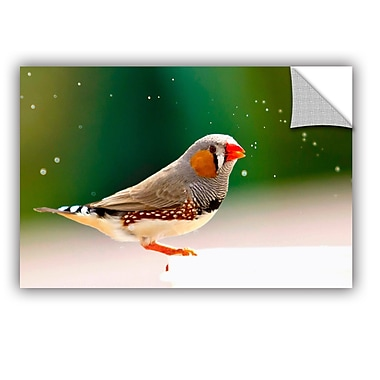 ArtWall Zebrafinch by Lindsey Janich Photographic Print; 32'' H x 48'' W