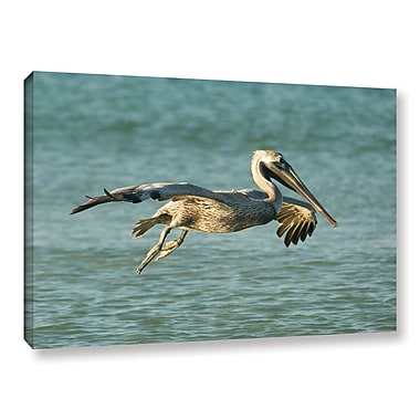 ArtWall Pelican11A by Lindsey Janich Framed Photographic Print on Wrapped Canvas; 16'' H x 24'' W