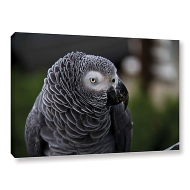 ArtWall Parrot by Lindsey Janich Framed Photographic Print on Wrapped Canvas; 16'' H x 24'' W