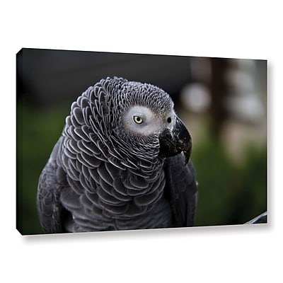 ArtWall Parrot by Lindsey Janich Framed Photographic Print on Wrapped Canvas; 12'' H x 18'' W