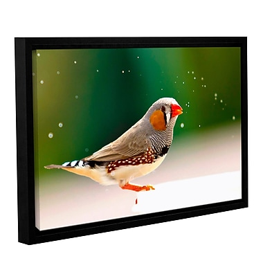 ArtWall Zebrafinch by Lindsey Janich Framed Photographic Print on Wrapped Canvas; 16'' H x 24'' W