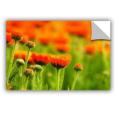 ArtWall Marigolds by Lindsey Janich Removable Photographic Print; 16'' H x 24'' W