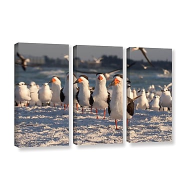 ArtWall 'Skimmers Siesta Key' by Lindsey Janich 3 Piece Photographic Print on Wrapped Canvas Set