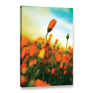 ArtWall African Daisy by Elena Ray Photographic Print on Wrapped Canvas; 18'' H x 12'' W