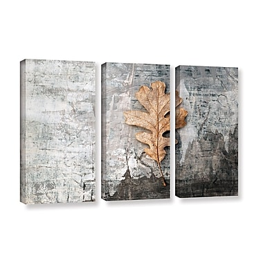 ArtWall Still Life Leaf by Elena Ray 3 Piece Photographic Print on Wrapped Canvas Set