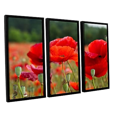 ArtWall '_3986' by Lindsey Janich 3 Piece Framed Photographic Print on Canvas Set
