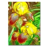 "Trademark Global Kathie McCurdy ""Iris Yellow Batik"" Canvas Art, 24"" x 18"""