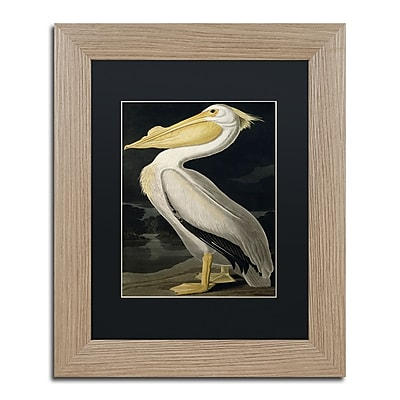 Trademark Fine Art ''American White Pelican'' by John James Audubon 11