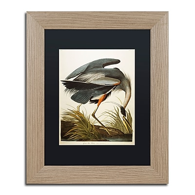 Trademark Fine Art ''Great Blue Heron'' by John James Audubon 11
