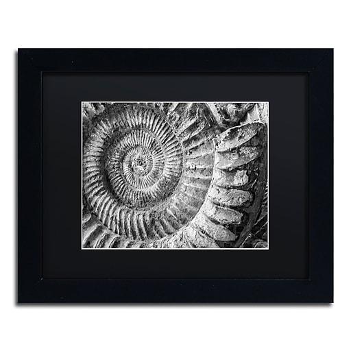 "Trademark Fine Art ''Amonita 1'' by Moises Levy 11"" x 14"" Black Matted Black Frame (886511869431)"
